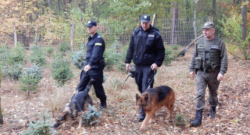 Komunikaty Policja, Policja Państwowa Straż Leśna dbają legalność stroiszu - zdjęcie, fotografia