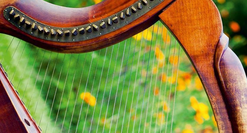 Koncerty, Zielony zawrót głowy - zdjęcie, fotografia