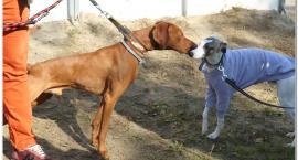 Zaprezentowały się psy myśliwskie