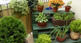 Piękne jak inowrocławskie ogródki