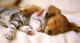 Hit internetu: nowa hiszpańska karma dla psów i kotów