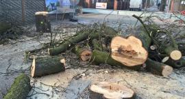 Pytania o Kasztanową. Czy tylko chore drzewa zostały wycięte?