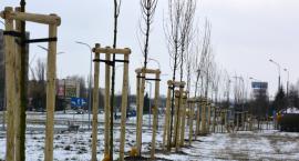 Półtora tysiąca nowych drzew i krzewów w mieście