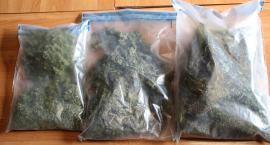 Posiadał pół kilograma marihuany