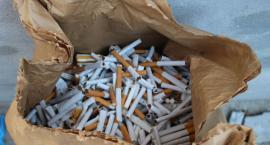Inowrocławscy policjanci zlikwidowali fabrykę papierosów