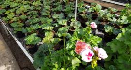 Uwaga na choroby roślin