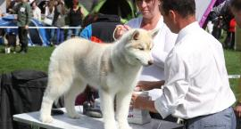 Psie piękności zaprezentowały się na wystawie