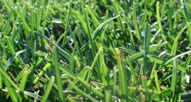 Trwa koszenie trawy
