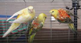 Egzotyczne ptaki pięknie się prezentują