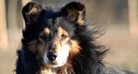 Pomóż bezdomnym zwierzakom z Inowrocławia w wiosennym sprzątaniu