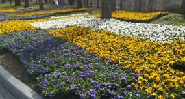 Wiosna wkracza do Inowrocławia