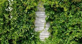 6 pomysłów na prywatność w ogrodzie