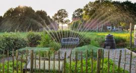 Opryskiwacze ogrodowe. Jaki opryskiwacz kupić do ogrodu?