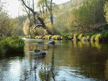 Rzeka, Zapomniana Bystrzyca - zdjęcie, fotografia