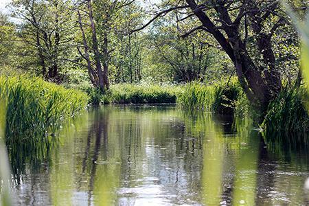 Rzeka, Upalne rzeki - zdjęcie, fotografia