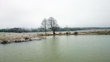 Rzeka, Brzóze okonie - zdjęcie, fotografia