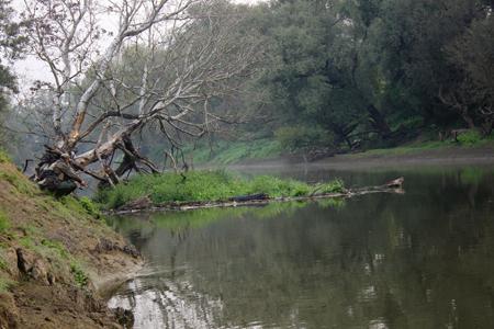 Rzeka, okolicach Dubienki - zdjęcie, fotografia