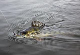 Jezioro, Jezioro okazów - zdjęcie, fotografia