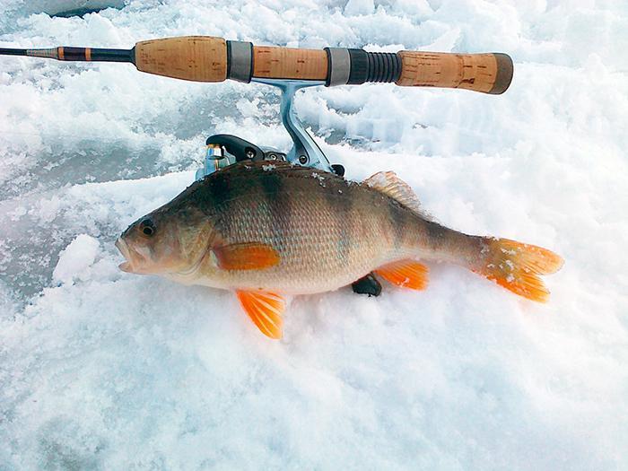 Jak łowić ryby - techniki , Gdzie szukać dużych garbusów - zdjęcie, fotografia