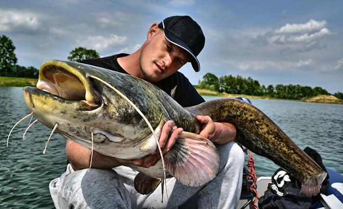 Jak łowić ryby - techniki , Sumowe rarytasy - zdjęcie, fotografia