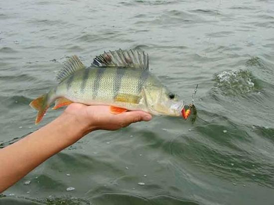Jak łowić ryby - techniki , prostu garbus - zdjęcie, fotografia