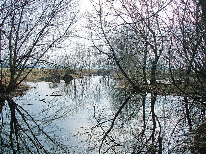 Rzeka, Fałszywe ujście Wilgi - zdjęcie, fotografia