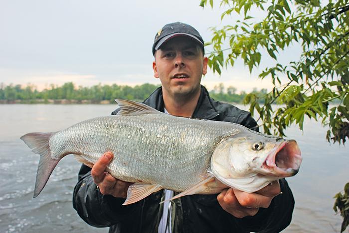 Jak łowić ryby - techniki , Boleniowy poligon - zdjęcie, fotografia