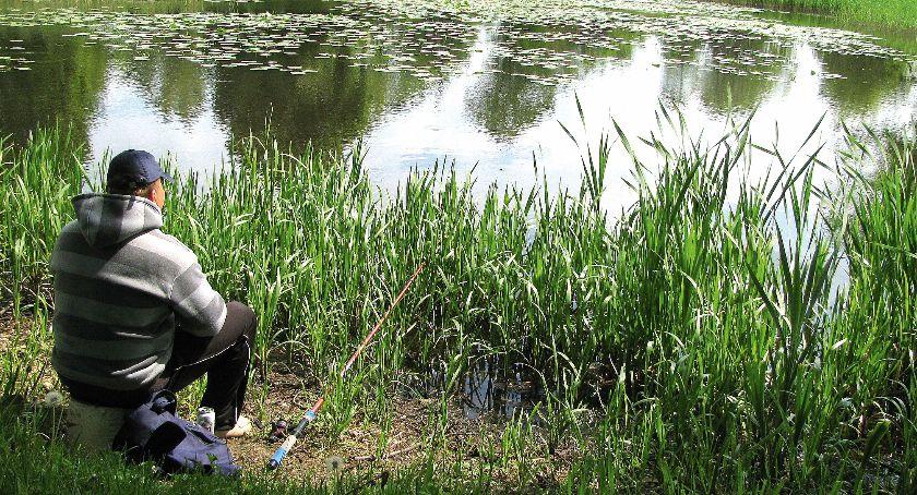 Jak łowić ryby - techniki , Letnie stawy sadzawki - zdjęcie, fotografia