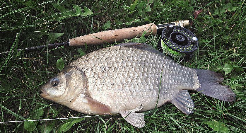 Jak łowić ryby - techniki , Łowienie karasi sztuczną muchę - zdjęcie, fotografia