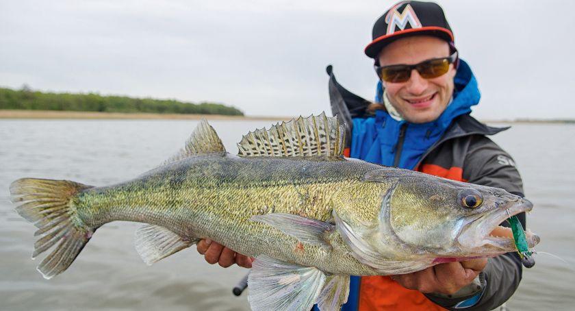 Jak łowić ryby - techniki , Morskie sandacze - zdjęcie, fotografia