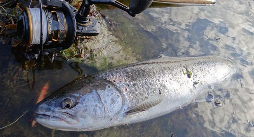 Jak łowić ryby - techniki , Błędy morskiego trociarza - zdjęcie, fotografia