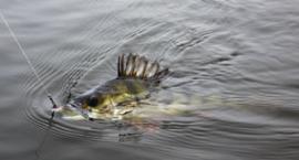 Jezioro okazów
