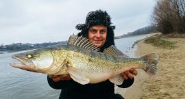 Duża guma i przedłużony opad - łowienie sandaczy