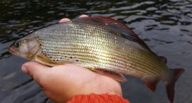 Łowienie na muchę w listopadzie