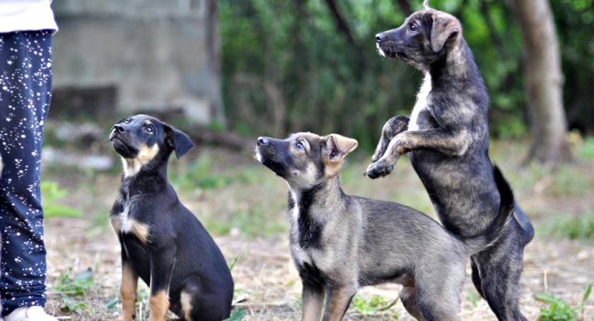 adopcje, Trójka słodziaków szuka - zdjęcie, fotografia