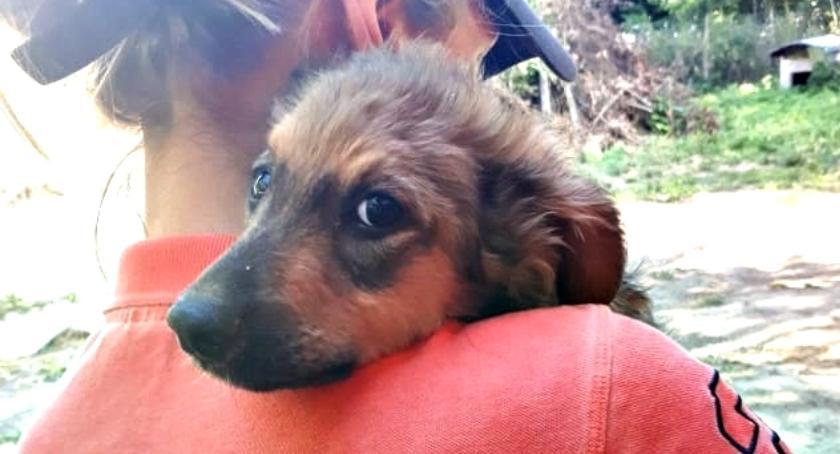 adopcje, Małgosia szuka - zdjęcie, fotografia