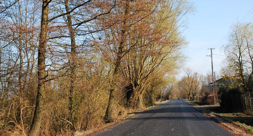 interwencje, Spróchniałe drzewa zostały - zdjęcie, fotografia
