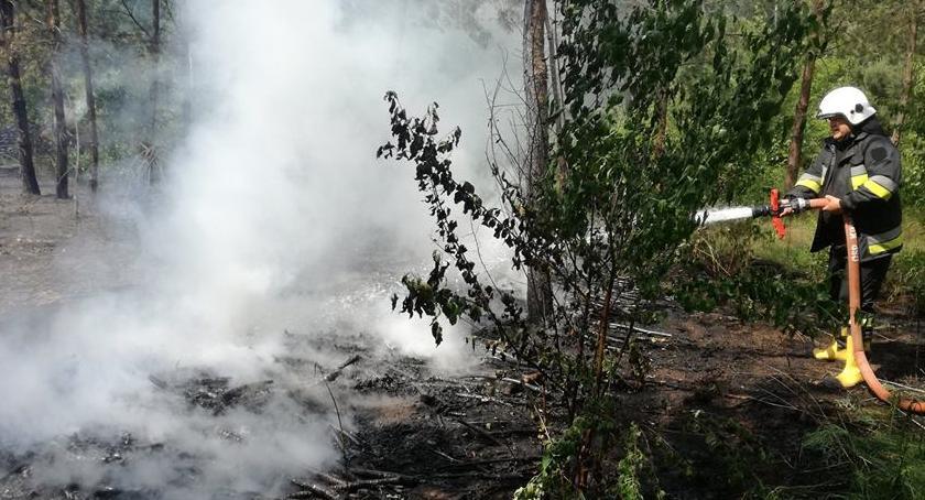 pożary, Płonęło lesie - zdjęcie, fotografia