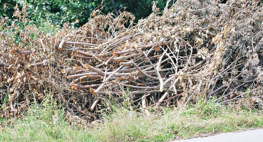 interwencje, Składowisko gałęzi rowie - zdjęcie, fotografia