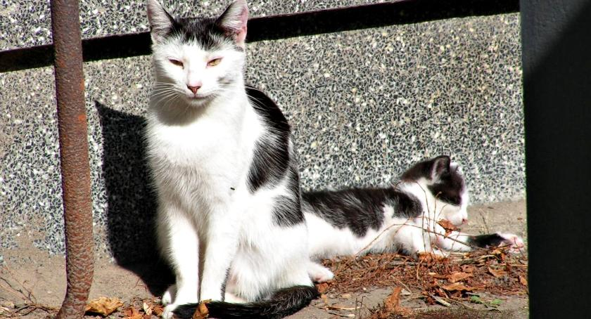 samorząd, kotami - zdjęcie, fotografia