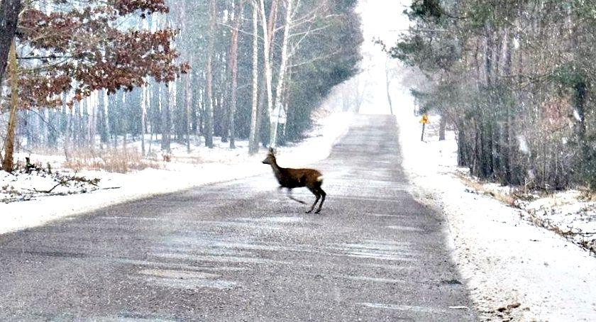 wypadki, początku zdarzeń udziałem dzikiej zwierzyny - zdjęcie, fotografia