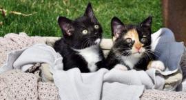 Kochasz kotki - te czekają na adopcję