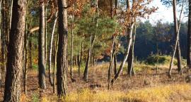 W Światowy Dzień Lasu, ciekawostki: czy wiesz, że mamy dwa rezerwaty przyrody?
