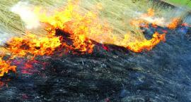 Płońscy strażacy apelują - nie wypalaj traw!