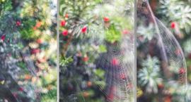 Magdalena Tok wygrała konkurs fotograficzny!
