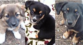 Płońszczak NA DOBRY DZIEŃ - 12.03.2019 - ruszamy z adopcjami zwierząt