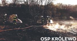 Strażackie dni w pigułce - dużo pożarów traw
