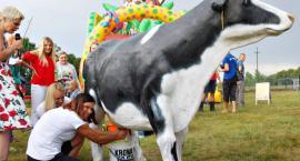 Dojenie krowy, ujeżdżanie byka i koncerty, czyli rodzinny festyn w Krysku