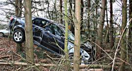 Audi między drzewami