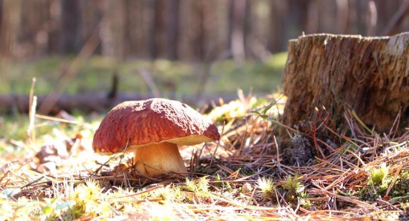 handel i usługi , Wysyp grzybów trochę faktów trochę mitów - zdjęcie, fotografia
